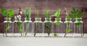 formation naturopathie